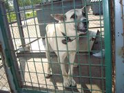Приют для животных дарит отличного пса в добрые руки