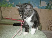 Котенок ТЕМКА даром 3 месяца