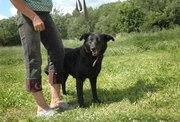 Ярина - отличная собака в дар