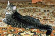 Котенок в дар. 4 месяца