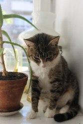 Уютная кошка ищет дом