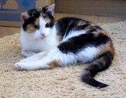 Кошка после аварии. Помогите стать домашней