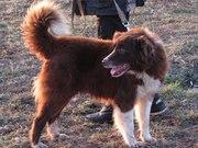 Собаки и щенки разного возраста в дар