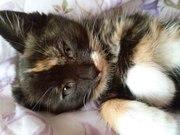ласковый и нежный котенок (девочка)