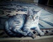 Нежный котенок Ласка ищет дом!