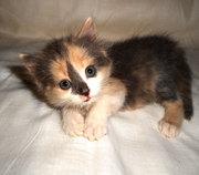 Подарю котенка, 1 месяц
