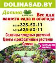 Саженцы плодовых и декоративных растений,  луковицы цветов,  семена. Витебск